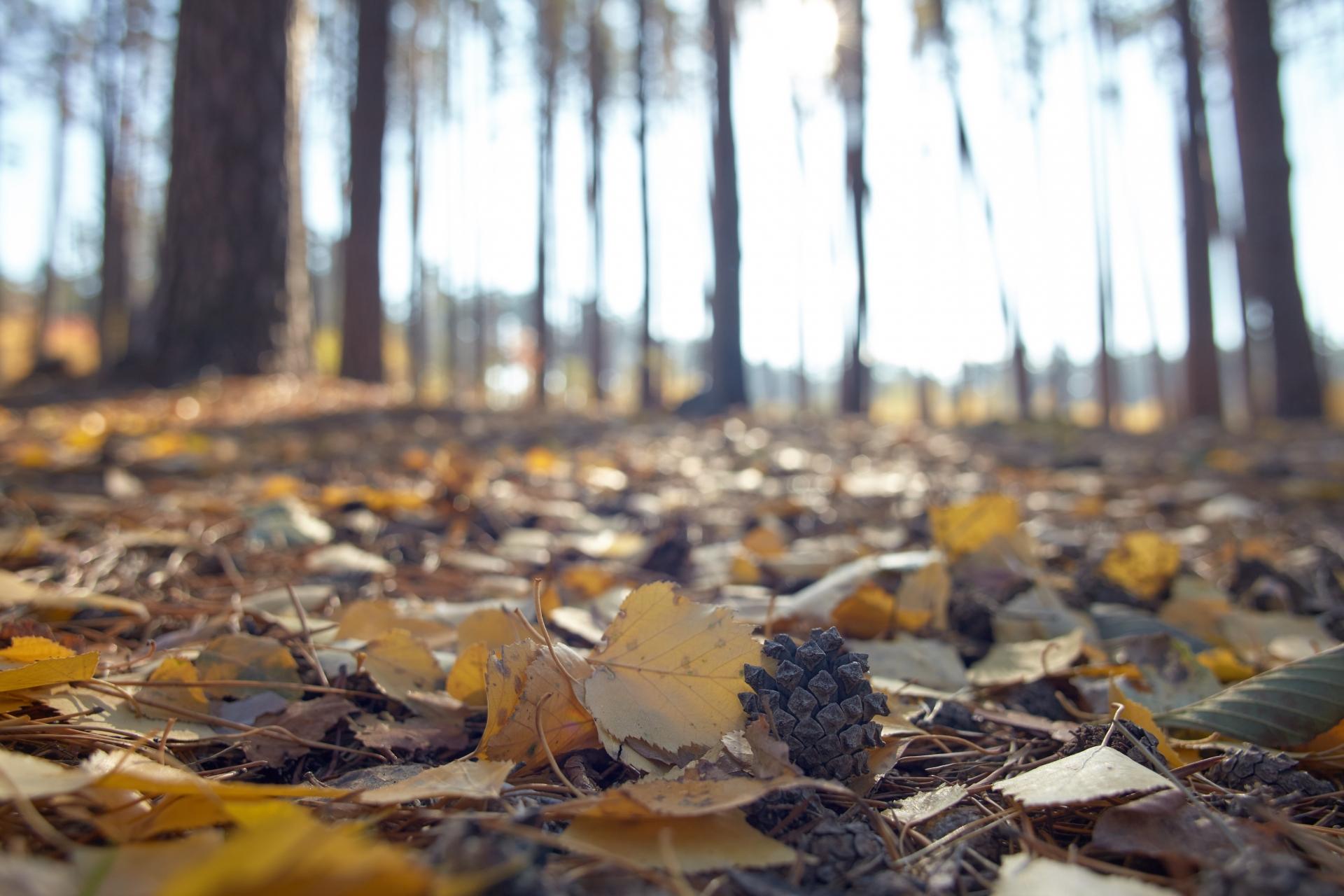 秋の相場は荒れる?